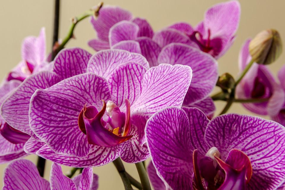 Resultado de imagem para imagens de orquídeas